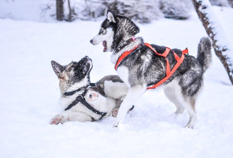 Welpengeschirr für Hundebabys