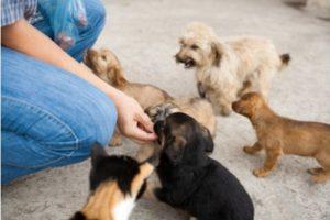 Hundewelpen füttern