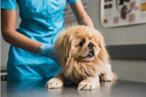 Hundewelpen Gesundheit