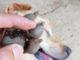 Zecken entfernen beim Hund