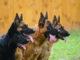 Hunderassen und der perfekte Hund
