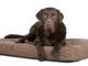 Labrador auf Hundebett
