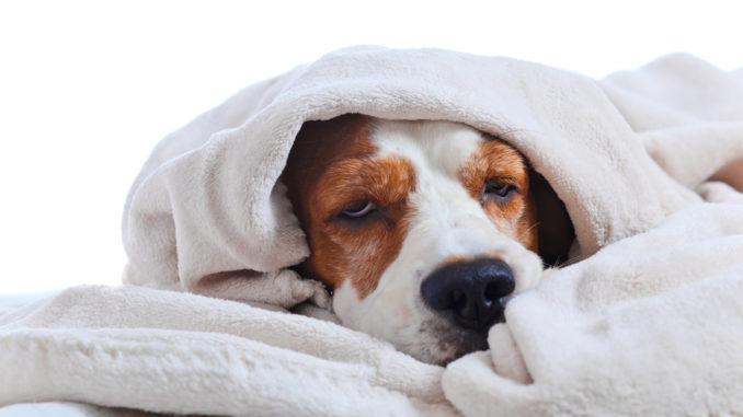 Darf ich meinem Hund Schmerzmittel geben?