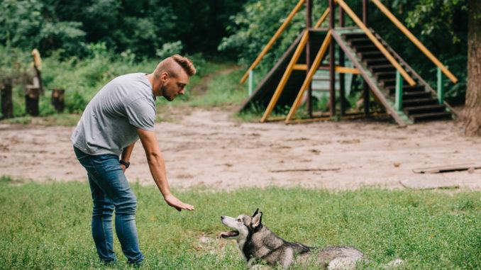 Training in einer Hundeschule