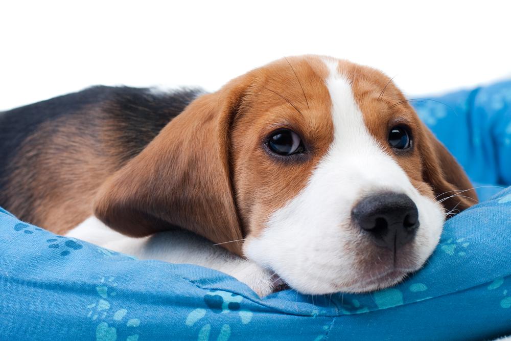 Hund schläft im Hundebett