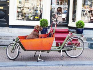 Hund auf dem Lastenrad